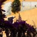 Sirmione: fialová záplava na jednom z malých náměstíček na starém městě