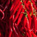 Sirmione: pepperoncini jsou tak ostré, jak vypadají