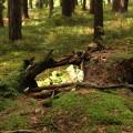 Budské lesy pod Hradem