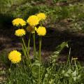 Konečně jaro v Průhonicích