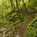 Srbsko a Svatý Jan pod Skalou: cesta nad Bubovickými vodopády