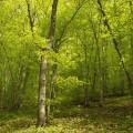 Srbsko a Svatý Jan pod Skalou: lesy u Loděnice