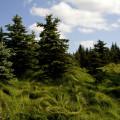 Krušné hory: lesy u Šebíku