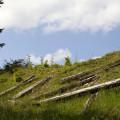 Krušné hory, zrušená trať Křimov - Marienberg: pražce