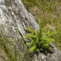 Krušné hory, zrušená trať Křimov - Marienberg: stromeček v otvoru po šroubech