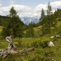 Výhled ze sedla Hals na vrcholy Sengsengebirge