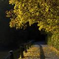 Podzimní ráno na Červené Lhotě