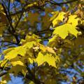 Podzimní barvy v paprscích ranního slunce