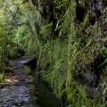 Madeira: Levada do Caldeirão Verde