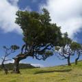 Madeira: Fanal