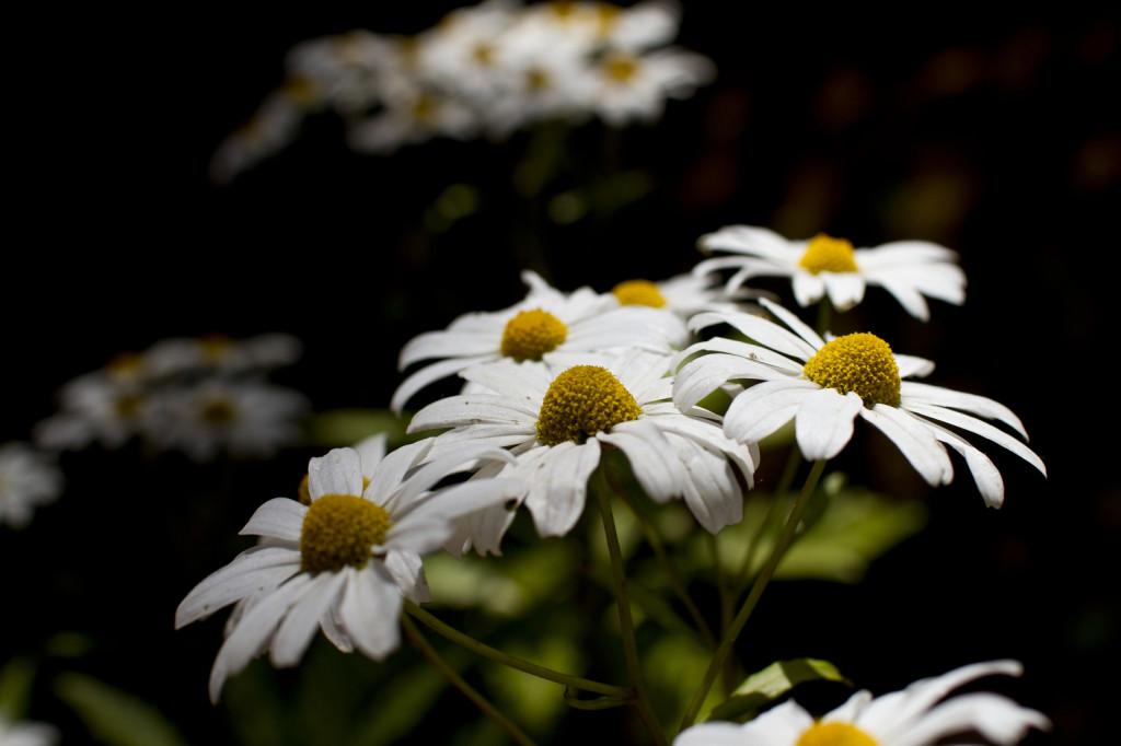 Madeira: květiny