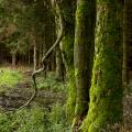 Krušné hory: les nad přehradou