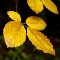 Krušné hory: podzim