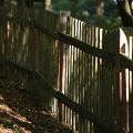 Hrubá Skála: arboretum
