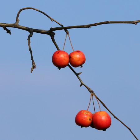 Začátek září, venku už je podzim. Jsme z toho docela na větvi.