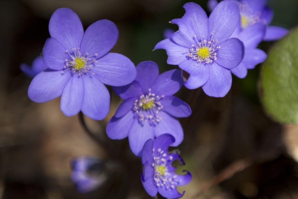 Jaro v Posázaví