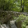 Cesta pod slap Savica