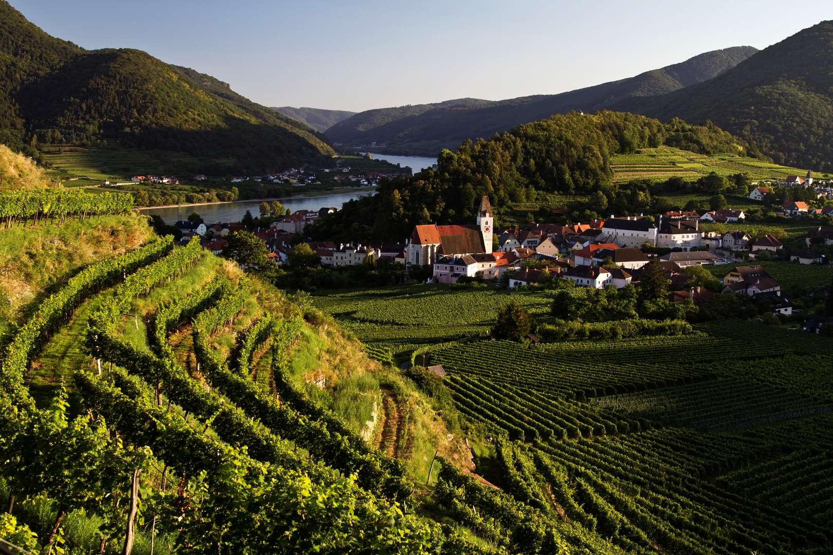 Wachau: Výhled na Spitz z vinice Singerriedel u Rotes Tor
