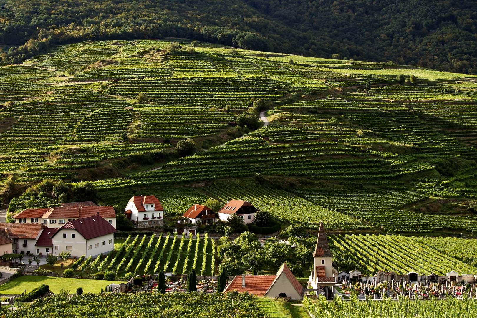 Wachau: Vinice Gasslreith